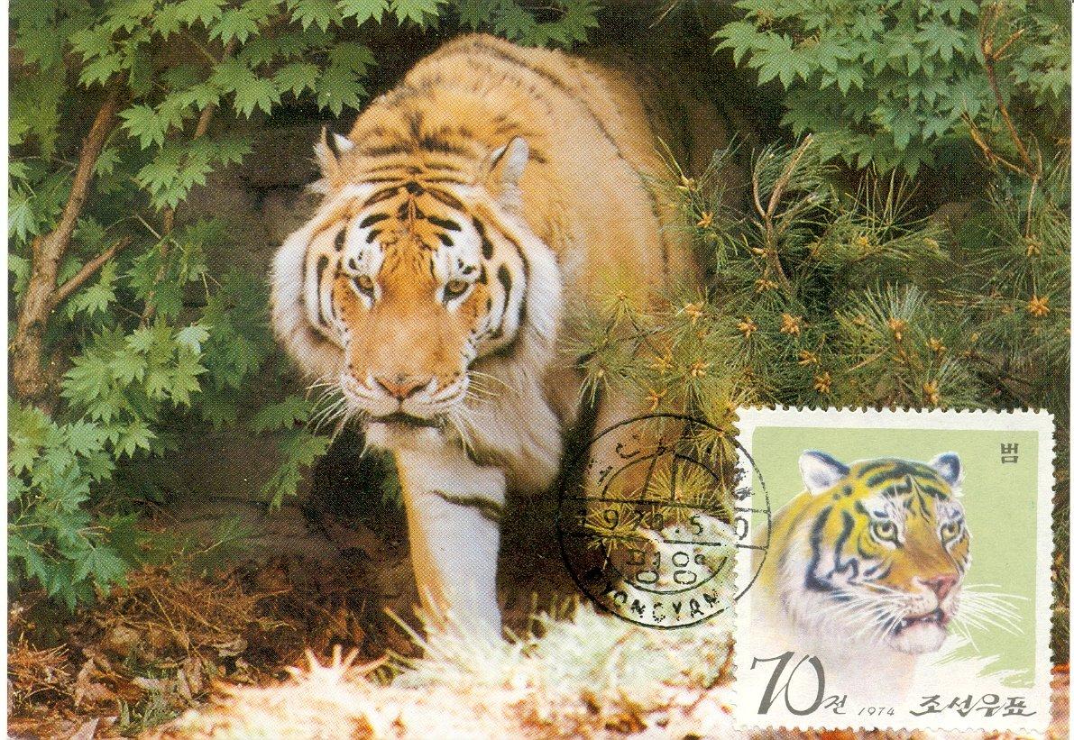 壁纸 动物 虎 老虎 猫科 桌面 1191_821